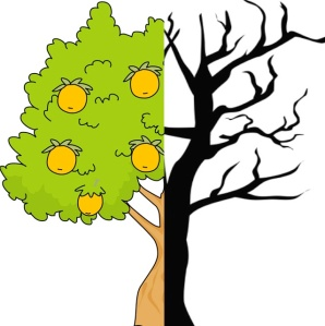 Orange Tree Clipart